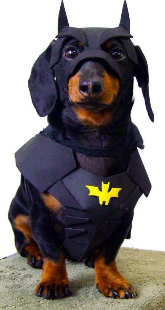batman dog halloween custome